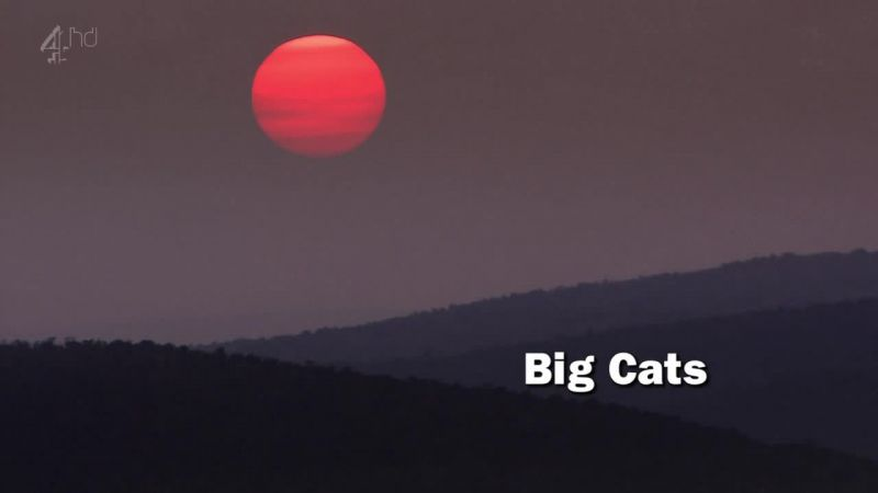 Image: Big-Cats-Ch4-Cover.jpg