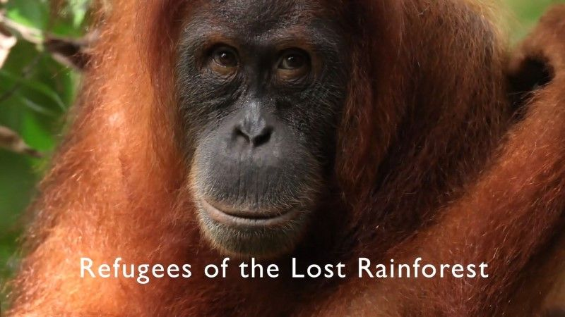 Image: Refugees-of-the-Lost-Rainforest-BBC-Cover.jpg