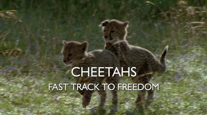 Image:Cheetahs-Fast-Track-To-Freedom-Cover.jpg