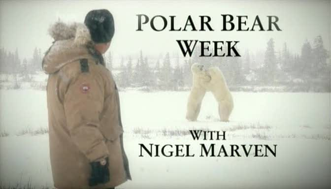 Image: Polar-Bear-Week-Cover.jpg