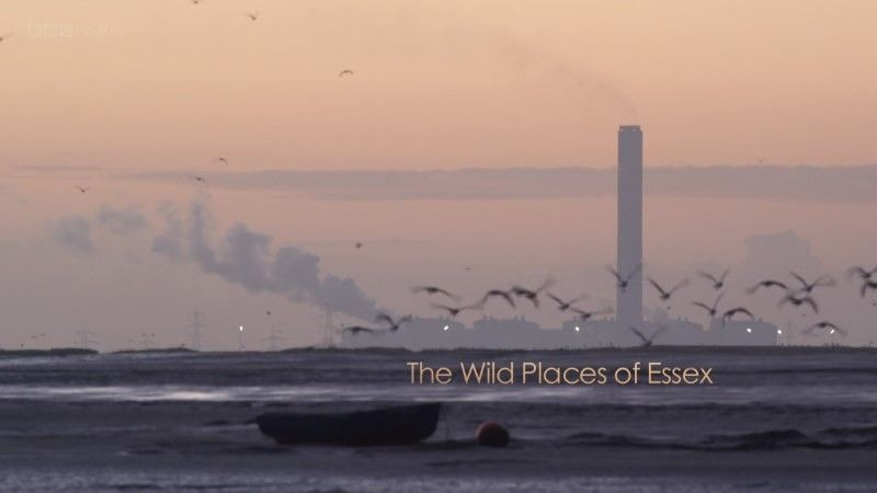Image: The-Wild-Places-of-Essex-BBC-1080p-Cover.jpg