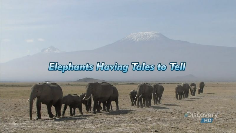 Image: Elephants-Having-Tales-to-Tell-Cover.jpg