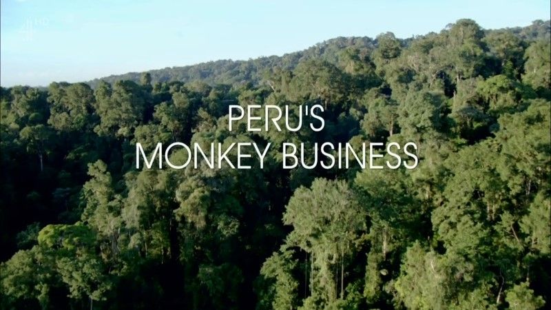 Image: Peru-s-Monkey-Business-Cover.jpg