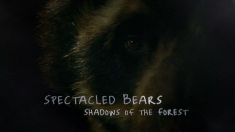 Image: Spectacled-Bears-Shadows-of-the-Forest-BBC-Cover.jpg