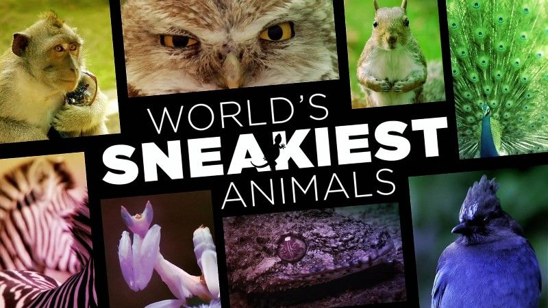 Image: World-s-Sneakiest-Animals-Cover.jpg