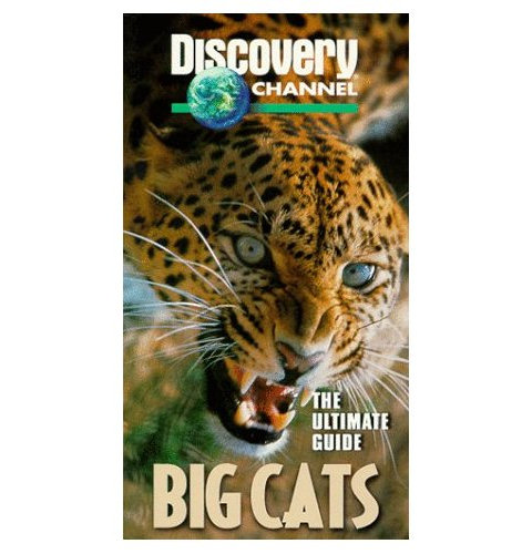 Image: Big-Cats-Cover.jpg
