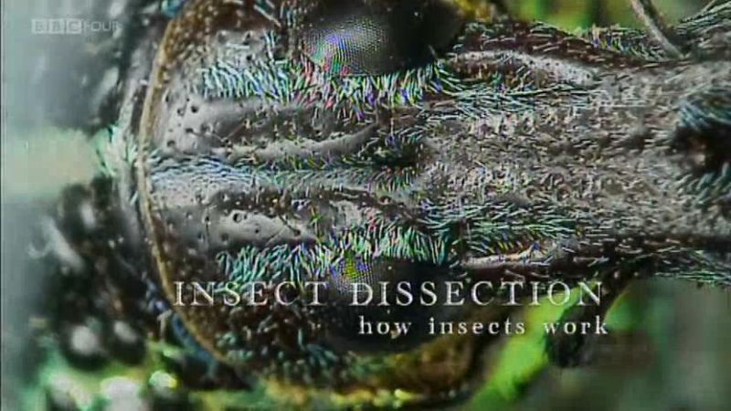 Image: Insect-Dissection-How-Insects-Work-Cover.jpg