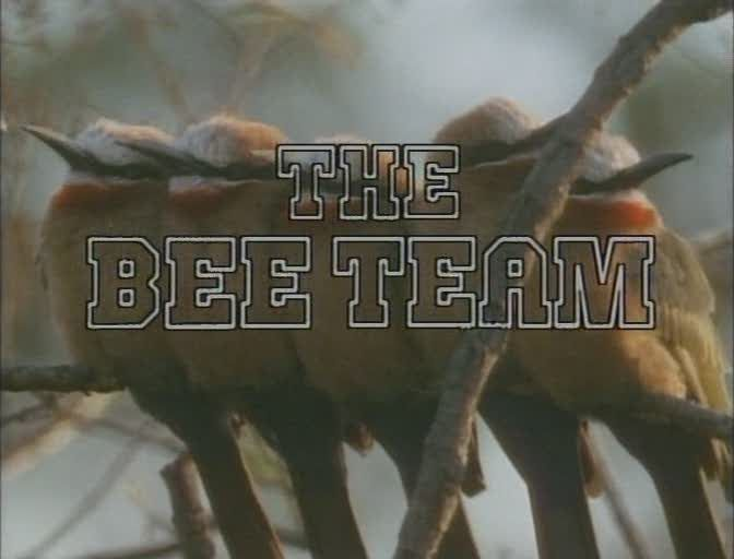 Image: The-Bee-Team-Cover.jpg