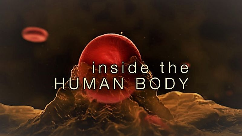 Image: Inside-the-Human-Body-Series-1-Cover.jpg