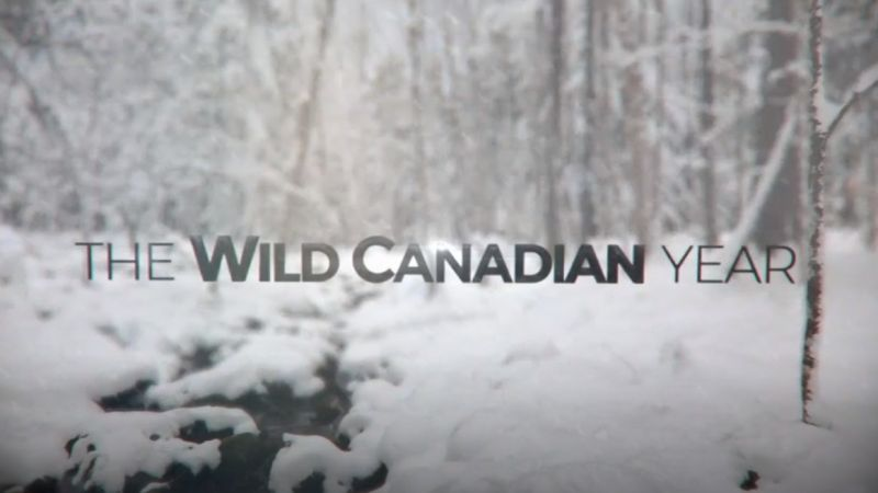 Image: The-Wild-Canadian-Year-Cover.jpg