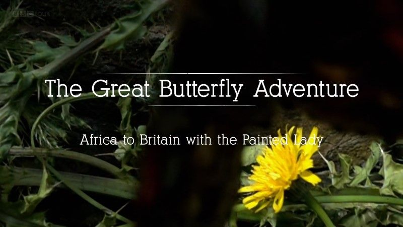 Image: The-Great-Butterfly-Adventure-BBC-1080p-Cover.jpg