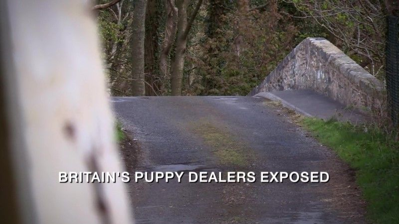 Image: Britain-s-Puppy-Dealers-Exposed-Cover.jpg