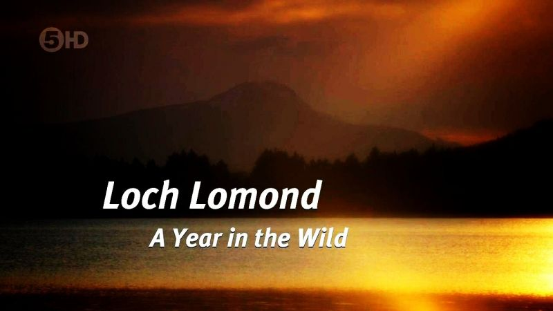 Image: Loch-Lomond-A-Year-in-the-Wild-Cover.jpg