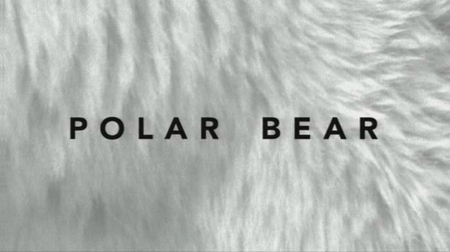 Image:Polar_Bear_Cover.jpg