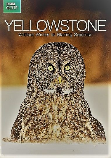 Image: Yellowstone-Wildest-Winter-to-Blazing-Summer-Cover.jpg