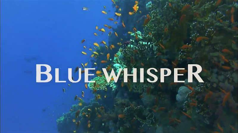 Image: Blue-Whisper-Cover.jpg
