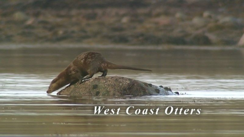 Image: West-Coast-Otters-Cover.jpg