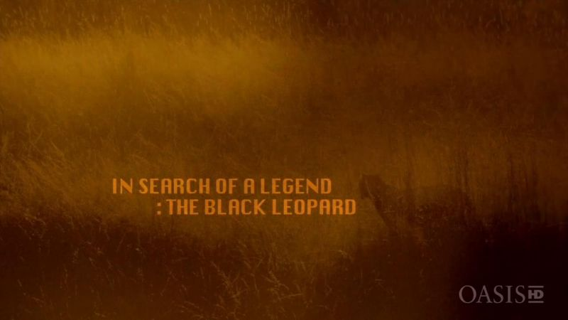 Image: In-Search-of-a-Legend-The-Black-Leopard-Cover.jpg
