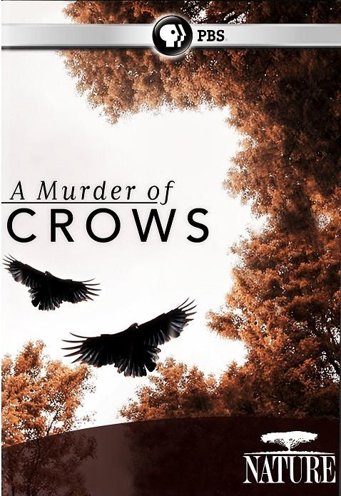 Image: A-Murder-of-Crows-PBS-Cover.jpg
