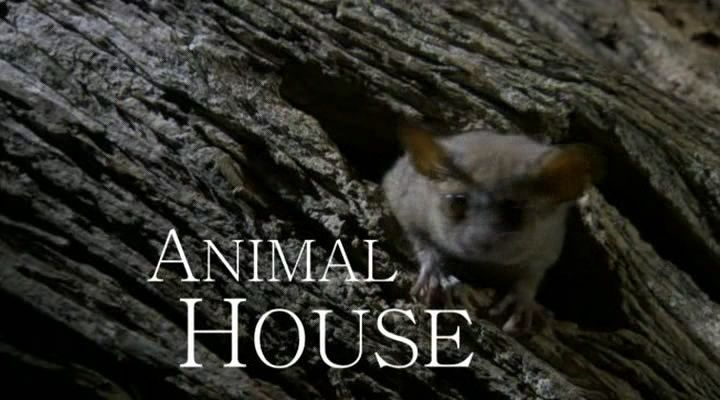 Image: Animal-House-Cover.jpg