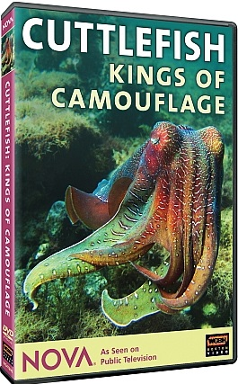 Image: Cuttlefish-Kings-of-Camouflage-Cover.jpg