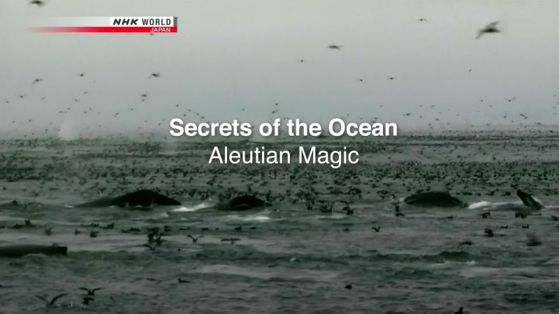 Image: Secrets-of-the-Ocean-Aleutian-Magic-Cover.jpg