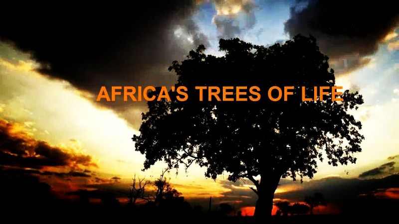 Image: Africas-Trees-of-Life-Cover.jpg