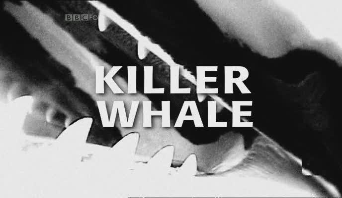 Image: Killer-Whale-Cover.jpg