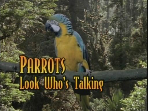 Image: Parrots-Look-Who-s-Talking-Cover.jpg