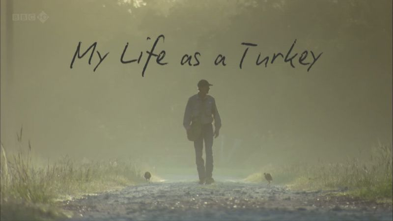 Image: My-Life-as-a-Turkey-Cover.jpg
