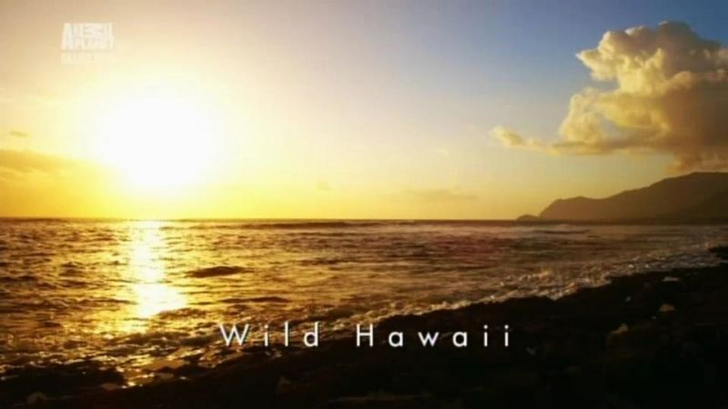 Image: Wild-Hawaii-Cover.jpg