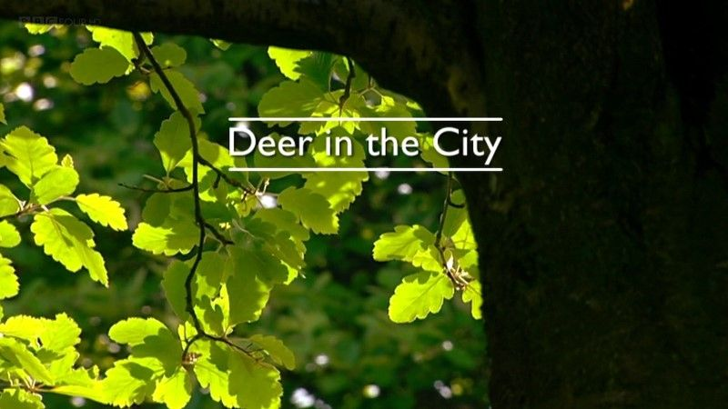 Image: Deer-in-the-City-Cover.jpg