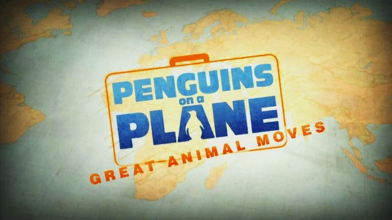 Image: Penguins-on-a-Plane-Great-Animal-Moves-Cover.jpg