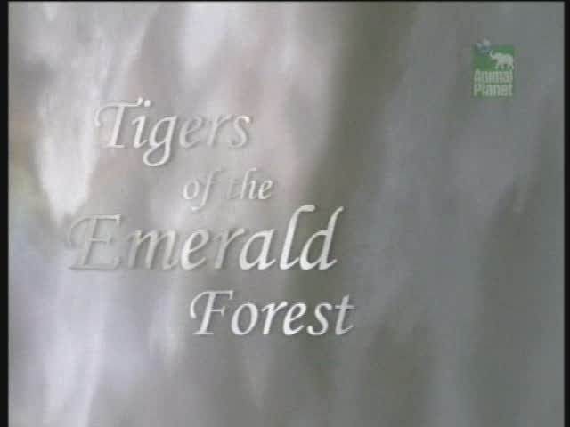 Image: Tigers-of-the-Emerald-Forest-Cover.jpg