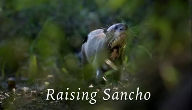 Image: Raising-Sancho-The-Giant-Otter-Orphan-Cover.jpg