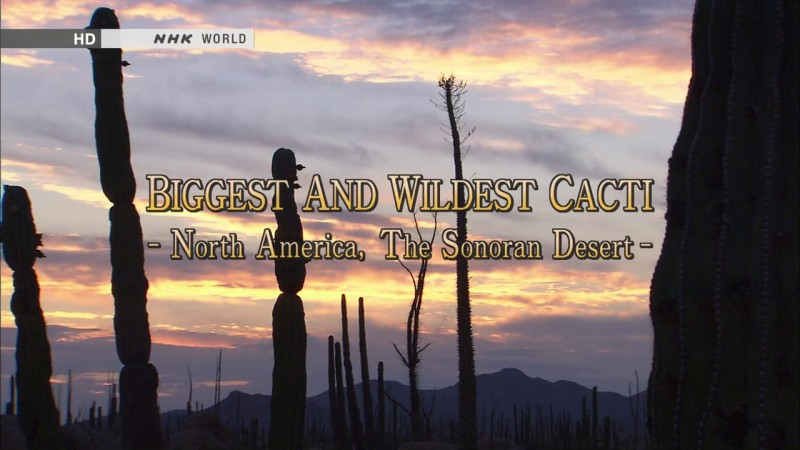 Image: Biggest-and-Wildest-Cacti-The-Sonoran-Desert-Cover.jpg