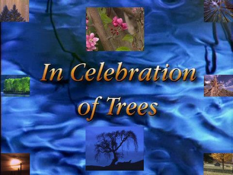Image: Discovery-in-Celebration-of-Trees-Cover.jpg