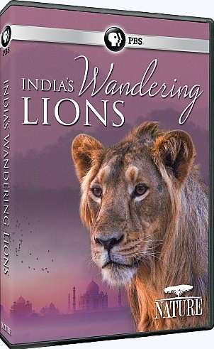 Image: India-s-Wandering-Lions-Cover.jpg