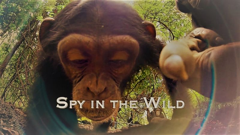 Image: Spy-in-the-Wild-Series-1-Cover.jpg