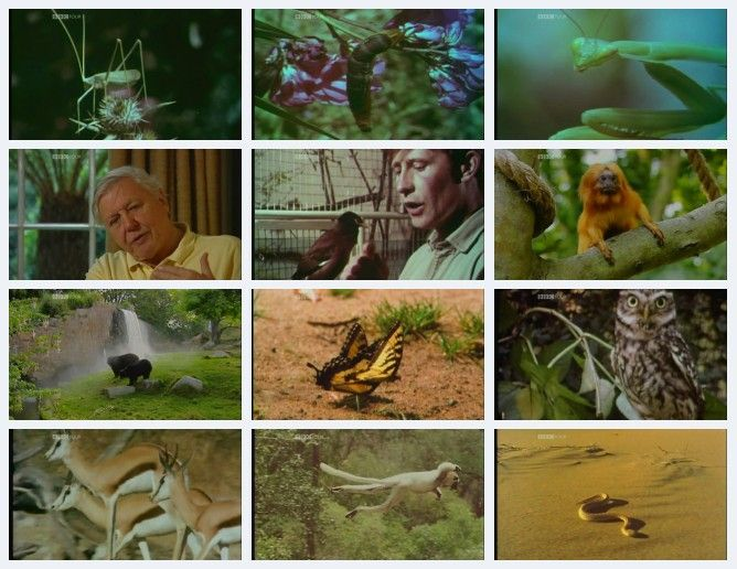 Image: The-Wild-Life-of-Gerald-Durrell-Screen0.jpg