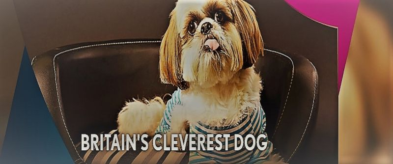 Image: Britain-s-Cleverest-Dog-Cover.jpg