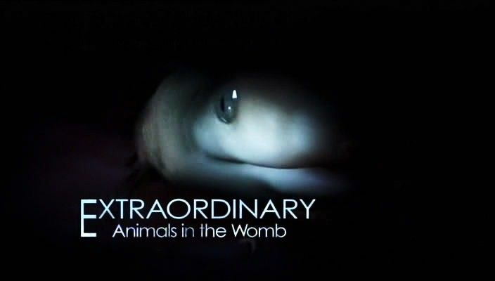 Image: xtraordinary-Animals-In-The-Womb-Cover.jpg