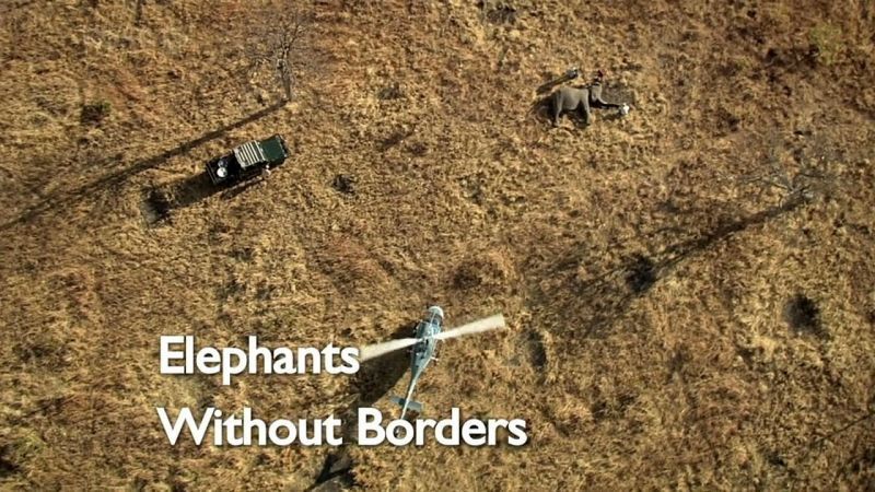 Image: Elephants-Without-Borders-Cover.jpg