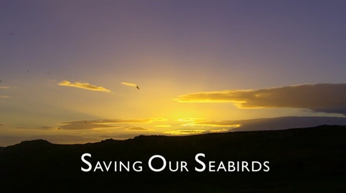 Image:Saving.Our.Seabirds-Cover.jpg