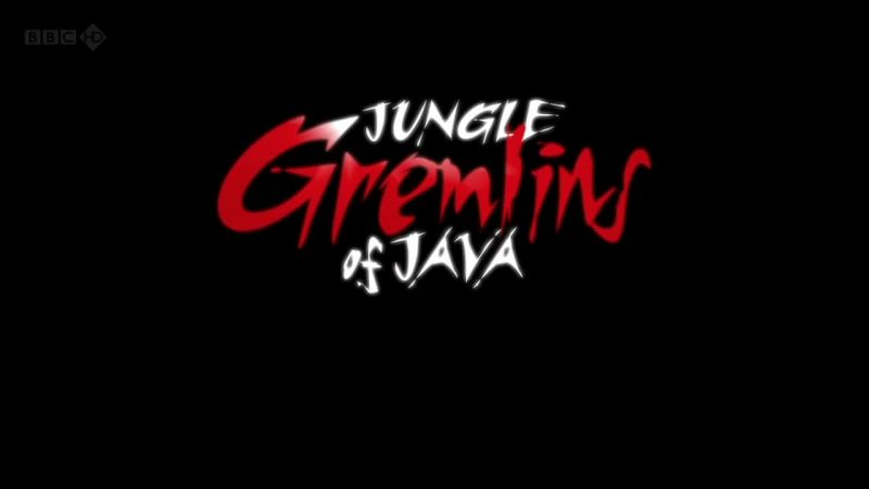 Image: Jungle-Gremlins-of-Java-Cover.jpg