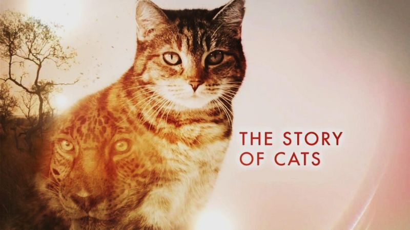 Image: The-Story-of-Cats-Series-1-Cover.jpg