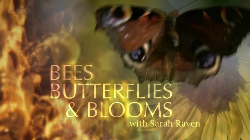 Image: Bees-Butterflies-and-Blooms-Cover.jpg