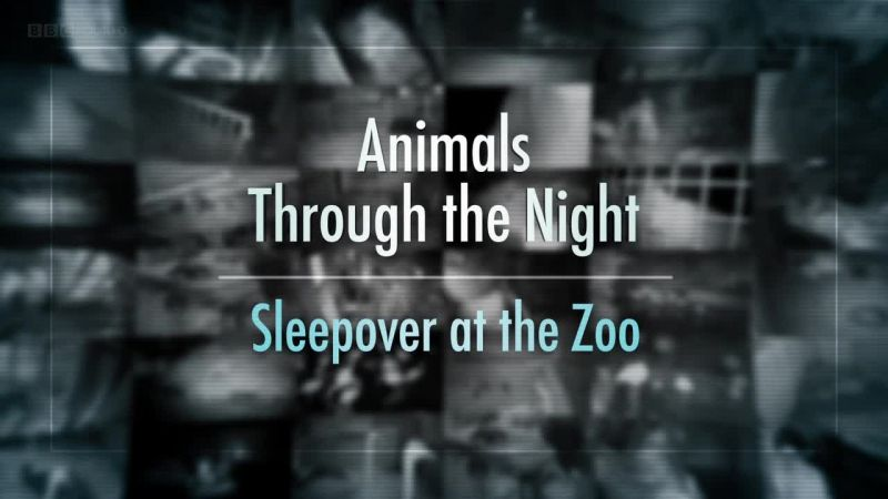 Image: Animals-Through-the-Night-Sleepover-at-the-Zoo-Cover.jpg