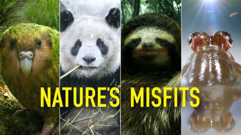 Image: Nature-s-Misfits-BBC-Cover.jpg