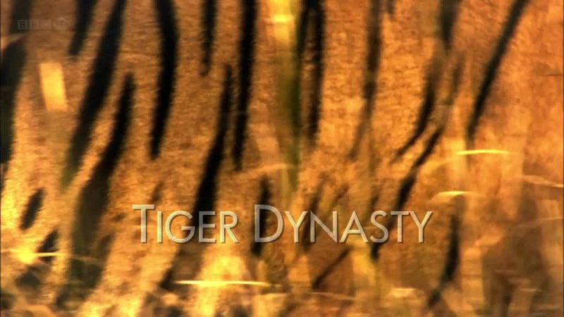 Image: Tiger-Dynasty-Cover.jpg